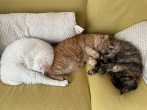 三色団子猫